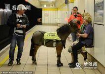 英国地铁迎来特殊乘客:导盲马熟悉环境准备上岗