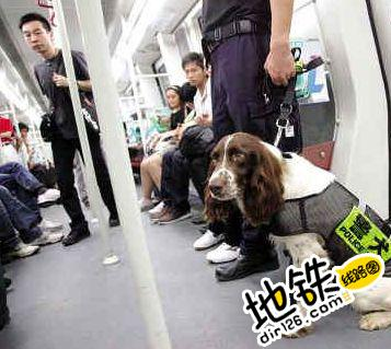 """警犬下地铁站巡逻 """"萌""""到乘客 轨道动态"""